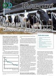Kvæg Nyt nr. 12 - Videncentret for Landbrug