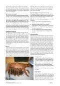 Råd og vejledning til nye opdrættere - Rhodesian Ridgeback ... - Page 2