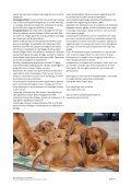 Råd og vejledning til nye opdrættere - Rhodesian Ridgeback ... - Page 4