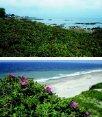 Beskyt den vilde flora langs kysterne - Naturstyrelsen - Page 7