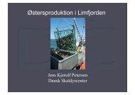 Østersproduktion i Limfjorden - Mare Novum