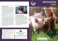 økologiske svin - Økologisk Landsforening