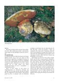 Svampe 31 (1-30) - Page 5