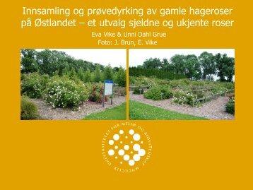 Innsamling og prøvedyrking av gamle hageroser på Østlandet – et ...