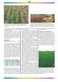 Tidsskrift for Frøavl nr. 2, oktober/november 2005 - DLF-TRIFOLIUM ... - Page 5