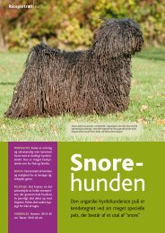Den ungarske hyrdehunderace puli er kendetegnet ved ... - Hunden