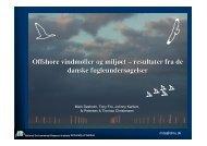 Offshore vindmøller og miljøet – resultater fra de danske ... - NVE