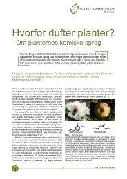 Hvorfor dufter planter? - Om planternes - Planteforskning
