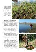 Den kystnære naturs planterigdom - Page 3