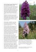 Den kystnære naturs planterigdom - Page 5