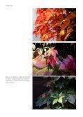 Byens.grønne.lunger - Jens Hvass - Page 4