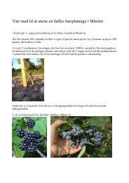 Dyrkning af vin mm i Mårslet