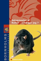 Bekæmpelse af Rotter - hvad gør jeg ?
