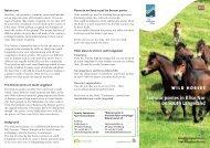 Vilde heste GB - Det Sydfynske Øhav