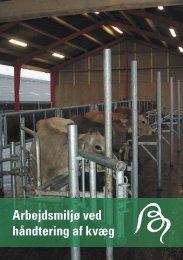 Arbejdsmiljø ved håndtering af kvæg - BAR - jord til bord.