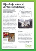 Temanummer om katternas situation - Djurskyddet Sverige - Page 7
