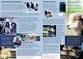 RESPEKT FOR LIV RESPEKT FOR LIV - Vegan Outreach - Page 3