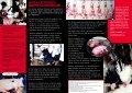 RESPEKT FOR LIV RESPEKT FOR LIV - Vegan Outreach - Page 4