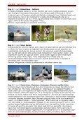 Gotland er en levende historiebog og hørte til ... - Politiken Plus - Page 3