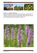 Gotland er en levende historiebog og hørte til ... - Politiken Plus - Page 5
