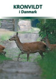Kronvildt i Danmark - Danmarks Jægerforbund