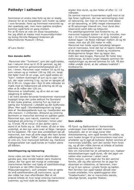 Pattedyr i saltvand - Århus Havkajakklub