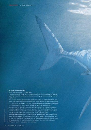 Så farlig er den hvide haj
