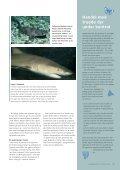 Så farlig er den hvide haj - Page 4
