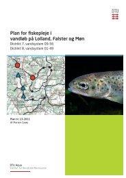 Plan for fiskepleje i vandløb på Lolland, Falster og Møn