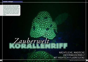 Korallenriff - Guest Service at Engelschall.com