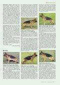 New Title - Schæferhundeklubben for Danmark - Page 7