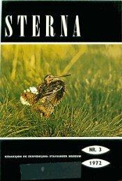 Sterna, bind 11 nr 3 (PDF-fil) - Museum Stavanger
