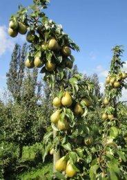 æbler - Planteskolen Vester Skovgård