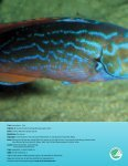 Kanon Natur – Fisk - Naturstyrelsen - Page 2