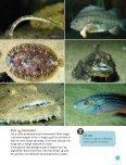 Kanon Natur – Fisk - Naturstyrelsen - Page 5