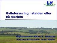 Gylleforsuring i stalden eller på marken - LandboNord