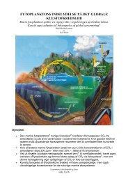 fytoplanktons indflydelse på det globale kulstofkredsløb