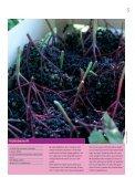 spisbare 3 2008 - Page 5