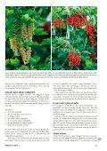 Bärbuskar (pdf) - Fobo - Page 2