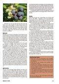 Bärbuskar (pdf) - Fobo - Page 4