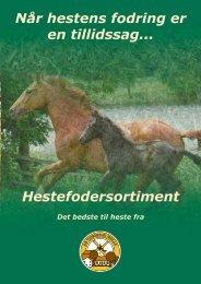 Når hestens fodring er en tillidssag - Heste- og handicapvenlige Ki ...