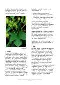 Øllets biologi - Visit Carlsberg - Page 5
