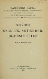 Danmarks fauna; illustrerede haandbøger over den danske ... - Drive