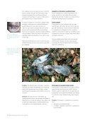 Sådan bekæmper du rotter og mus uden gift - Skanderborg Kommune - Page 4