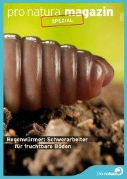 Regenwürmer: Schwerarbeiter für fruchtbare Böden - Pro Natura