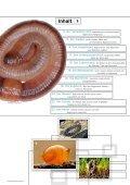 Regenwürmer: Schwerarbeiter für fruchtbare Böden - Pro Natura - Seite 3