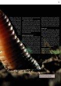 Regenwürmer: Schwerarbeiter für fruchtbare Böden - Pro Natura - Seite 5