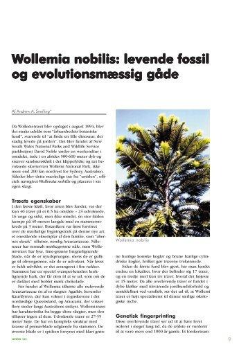 Wollemia nobilis: levende fossil ollemia nobilis ... - Skabelse.dk