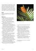 Wollemia nobilis: levende fossil ollemia nobilis ... - Skabelse.dk - Page 3