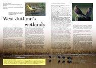 West Jutland's wetlands - Coast Alive
